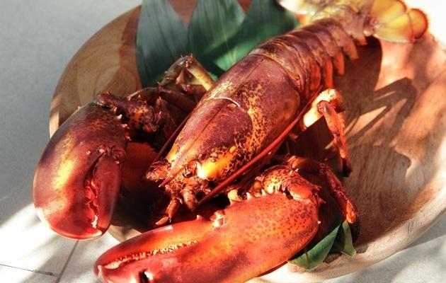 台中【樂軒日式鍋物料亭】波士頓活龍蝦&頂級牛小排雙人套餐